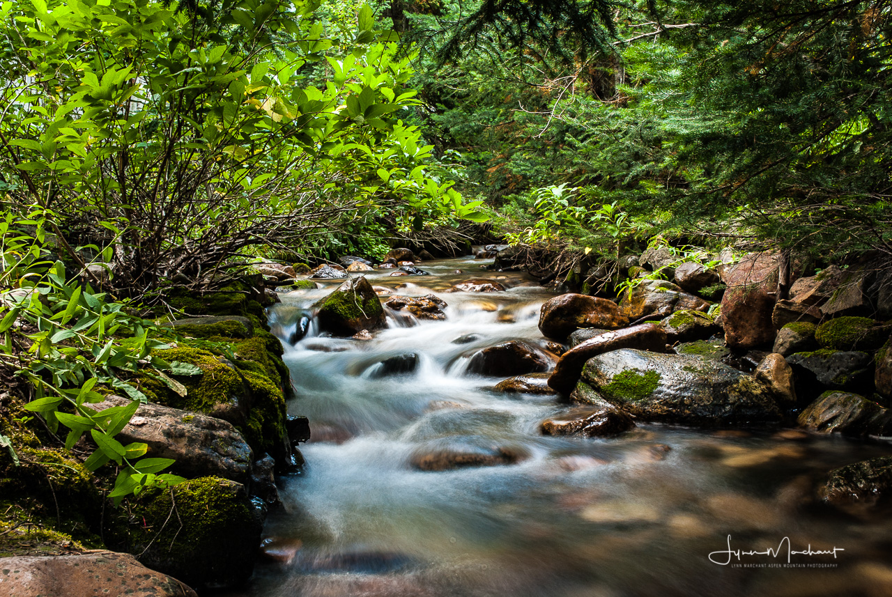 Stream in Big Cottonwood Canyon, Utah